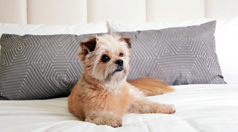 Best Dog Friendly Hotel Vegas